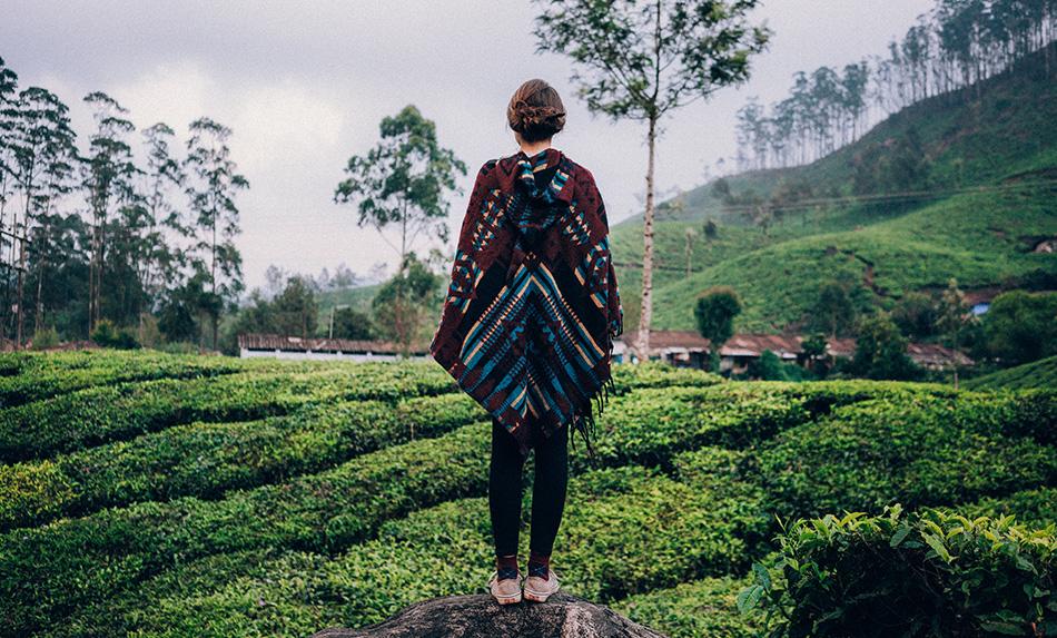 Qi Tea Stockists